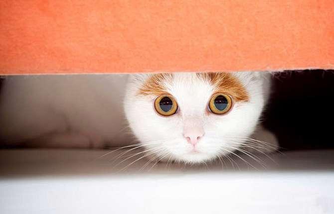 Если моча кота пахнет аммиаком — причины, чем это опасно и что делать. Как избавиться от запаха