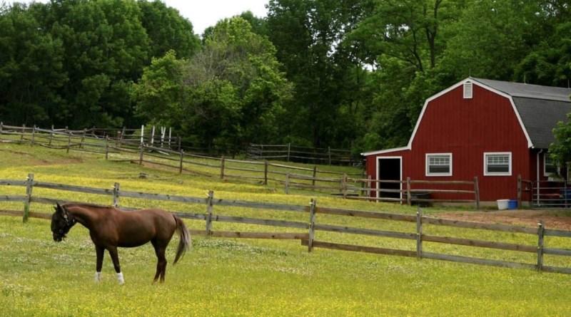Çiftliğimde atla geziyorum