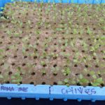Hydroponics at Industrial Country Market