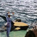 Sea World San Antonio - Orca Killer Whale flipped