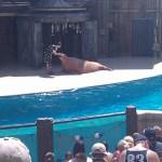 Sea World San Antonio - Walrus