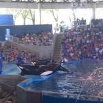 Sea World San Antonio - Orca Killer Whale
