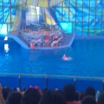Sea World San Antonio - Dolphin in Air