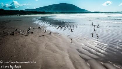 Diamong Head beach