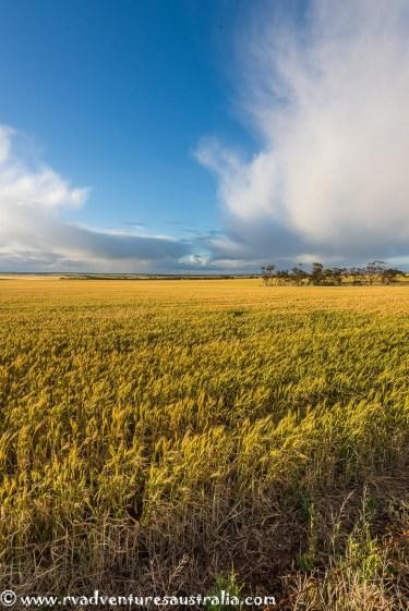 eyre-peninsular-south-australia-84