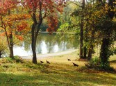 Autumn Colors and Turkeys