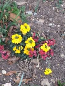 flowers-in-the-mt-vernon-garden