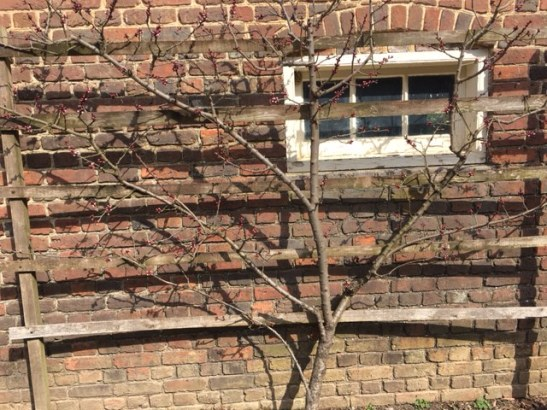 fruit-trees-outside-the-greeen-houseslave-quarters