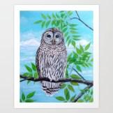 barred-owl-jdt-prints