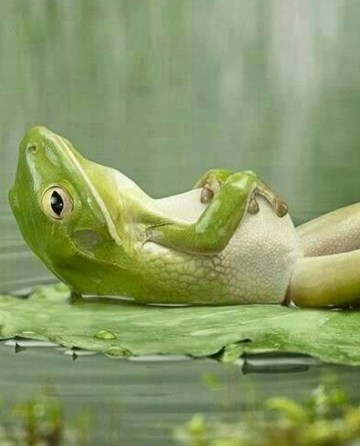 Frog cooling down