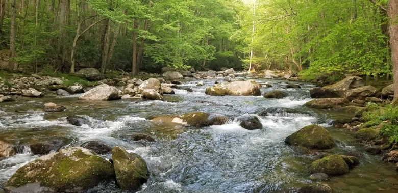 Little River in Great Smoky Mountains National Park.