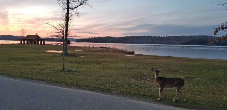 Deer walking through Lake Guntersville State Park campground.