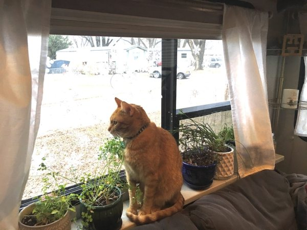 Our cat sitting on plant shelf behind sofa in our fifth wheel RV