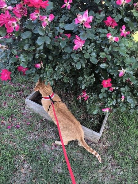 Our cat enjoying nature