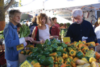A farmers' market provides an abundance of vegetables.
