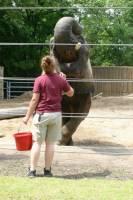 b2ap3_thumbnail_ARLINE-Trainer-and-elephant.jpg
