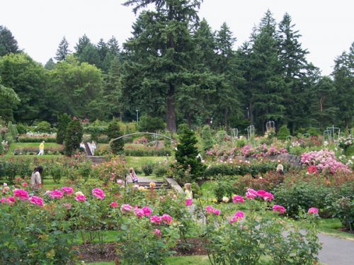 Great Escapes: International Rose Test Gardens in Portland, Oregon ...