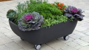Start a Small Portable Garden in Your RV RV Life