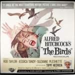 """Finding """"The Birds"""" in Bodega, California"""