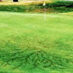 Golfer Dies After Being Struck by Lightning