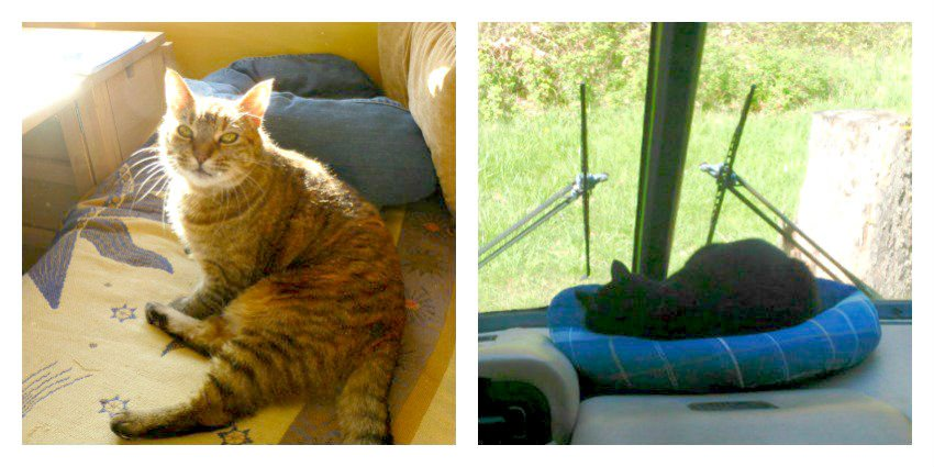 RVing with cats