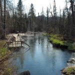 Stop And Soak At Liard Hot Springs Provincial Park