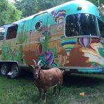 Meet Frankie Rae, The RVing Adventure Goat