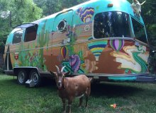 Meet Frankie Rae, The RVing Adventure Goat