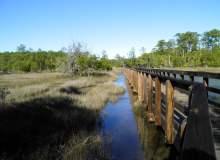 Camp Along Georgia's Intracoastal Waterway