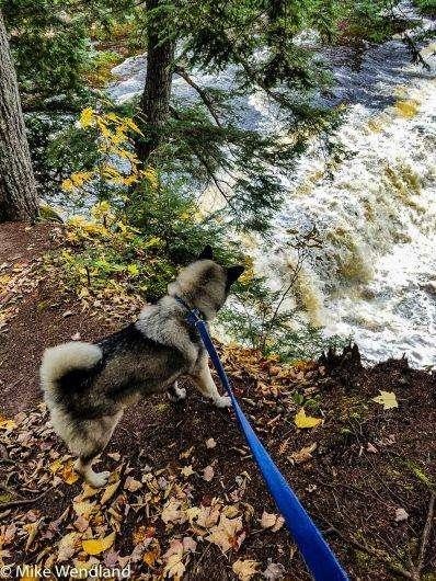 Bo checks out the raging Presque Isle River