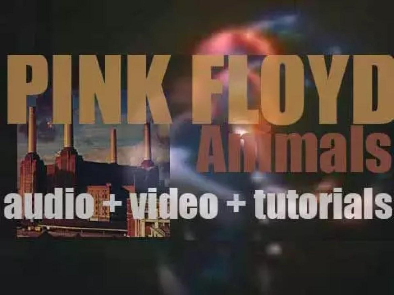 Pink Floyd release their tenth album : 'Animals' (1977)