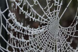 Some Spiders Make Antifreeze, says U. Wisconsin-Green Bay Prof