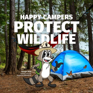 Great American Campout Is Back, Enter to Win a Keystone RV and Jellystone Stay