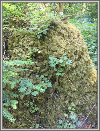 Moss Covered Trunk