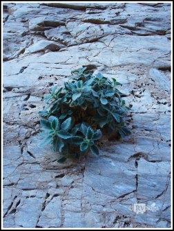 True Grit, Mosaic Canyon