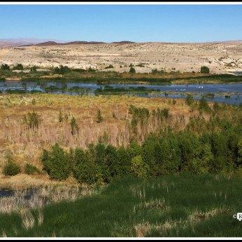 Wetland in Desert
