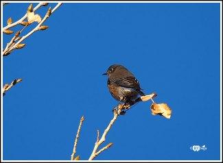 An Unknown Little Bird. Leasburg Dam State Park, New Mexico