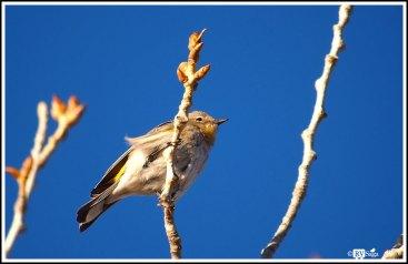 A Tiny Bird