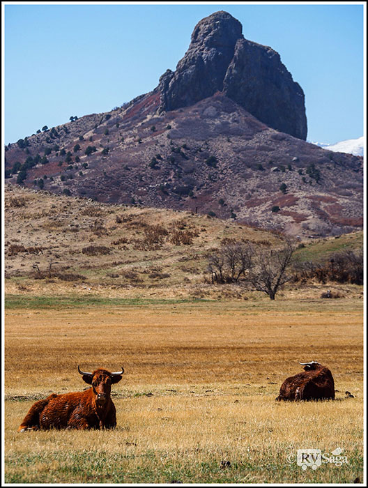 Cattle-and-Goemmer's-Butte