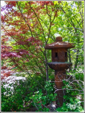 Red Maple and A Stone Lamp