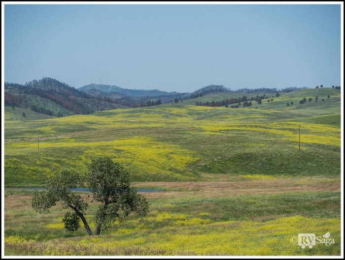 Picturesque-Landscape-of-Custer-State-Park