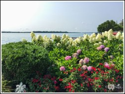 Beautiful Flowers by St Clair River at Marine City