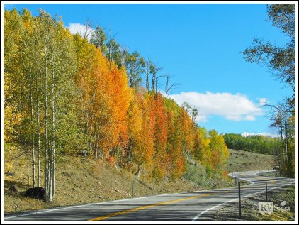 Fall Colors on Boulder Mountain. Scenic Byway 12 . Utah.