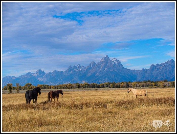 Horses-and-Grand-Teton