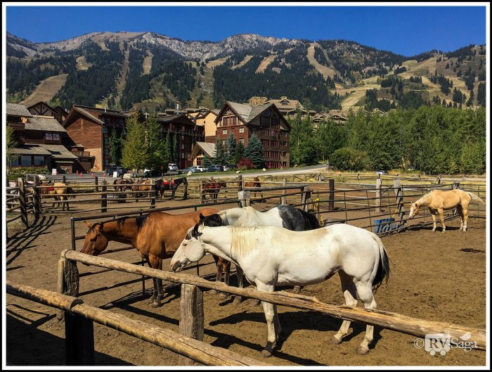 Horses-at-Teton-Village-Trail-Rides