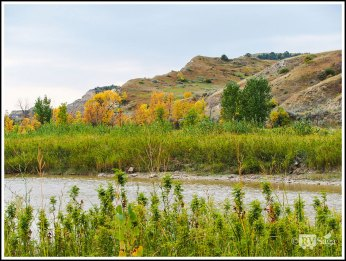 Trees Turning Colors by Little Missouri River