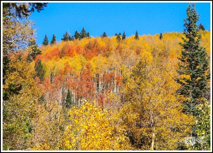 Aspen-View