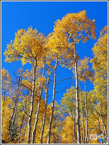 Golden Aspens. Sangre de Cresto Mountains. Santa Fe, New Mexico