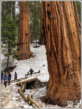 General Sherman Trail at Sequoia National Park