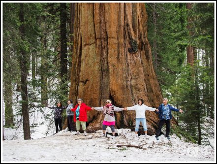 Ladies Hand In Hand In Front of A Giant Sequoia